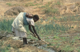 All Development is Local: implementing programs of empowerment to ensure sustainabledevelopment